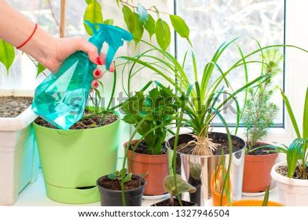 Hand sprays from a spray gun sprays plants in the house #1327946504