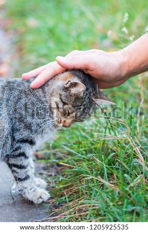 hand stroking a cat #1205925535