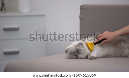 Hand stroking lazy cat with special deshedding tool lying on couch, pet care