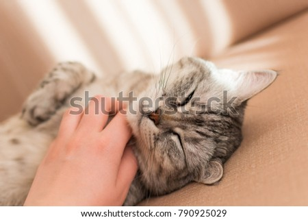 hand stroking the cat under it's neck background #790925029