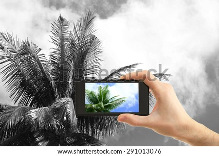 Hand taking photo of palm by smartphone #291013076