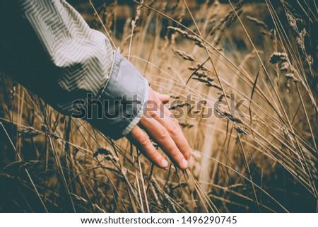 Hand touches grass in the dawn sun.