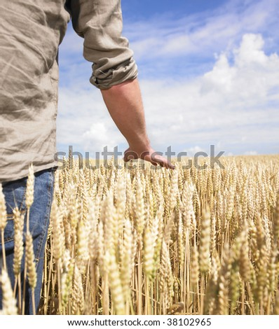 Hand touching top of wheat field