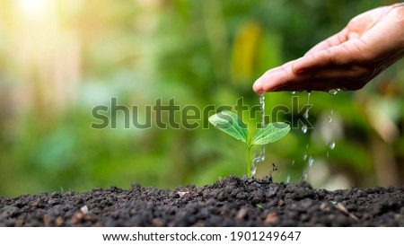 Hand watering plants that grow on good quality soil in nature, plant care, and tree growing ideas. Stockfoto ©