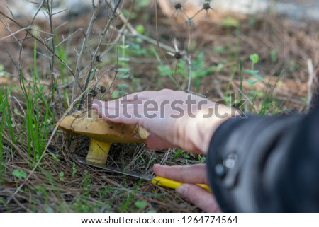 Hand with a knife cutting a yellow