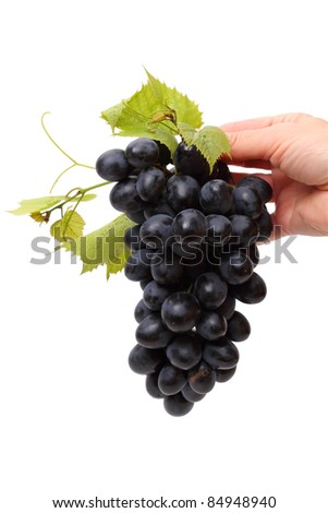 Hand with blue grapes isolated on white background