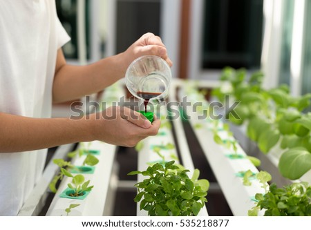Hand with fertilizes on organic hydroponic vegetable growing in agriculture farm at home