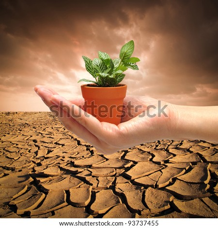 hand with small plant on  dry cracked land background for Global Warming Concept - stock photo