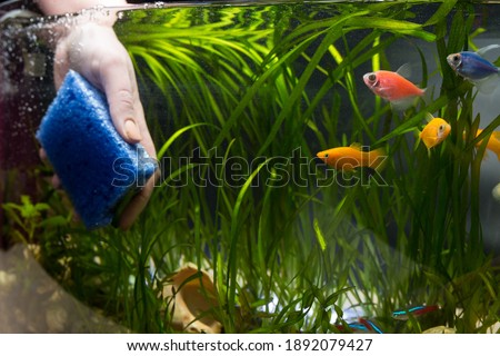 Hand with sponge cleaning aquarium with plans and fish.  Сток-фото ©