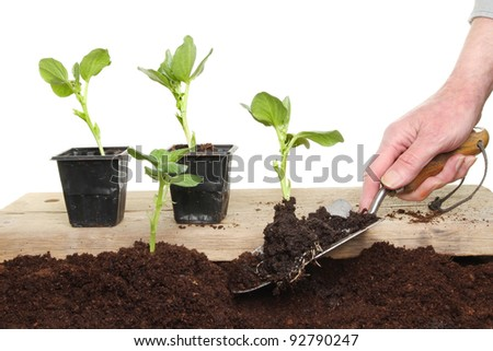 Hand with trowel planting vegetable seedlings into soil from a wooden board
