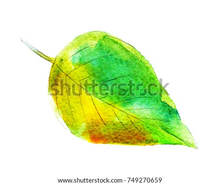Handdrawn vintage Poinsettia leaf, watercolor illustration isolated on white background.