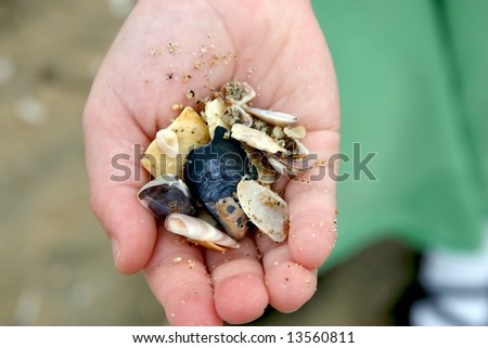 handful of sea shells