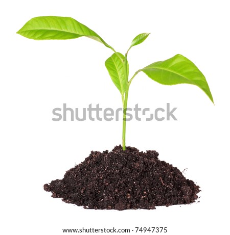 Handful of the ground and plant, isolated on a white background