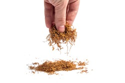 handful of tobacco in a male hand on a white background. isolate