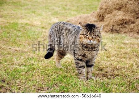handicapped cat - missing leg