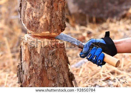 Handle a knife to cut the trees.