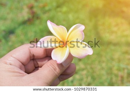 handle yellow and pink orchid flower in nature background,copy space