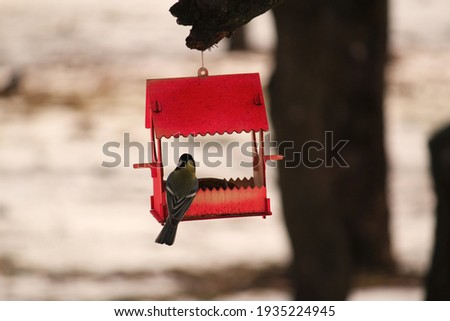 handmade cute red bird house feeder in the park on the tree for feeding wild birds and squarels, two wild snowbirds inside eating the seeds Stock fotó ©