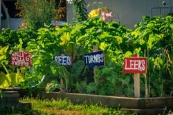 Handmade markers and green plants in home Veggie Garden