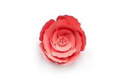 Handmade paper cut flower on isolated white background, design element for wedding invitation. Rose.