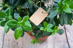 Handmade paper price tag or blank tag for your label lying on the azalea leaves.