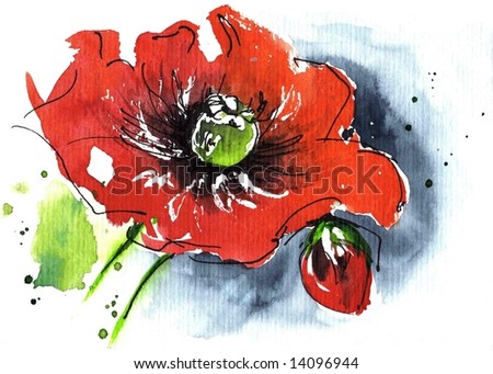 Handpainted floral watercolor illustration: Red poppie flower and blue isolated on white.Art is created and painted by photographer.