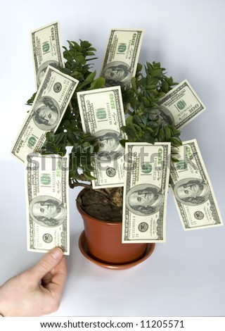 hands  blows off dollars  from the tree of money