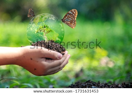 Hands child holding tree with butterfly keep environment on the back soil in the nature park of growth of plant for reduce global warming, green nature background. Ecology and environment concept.
