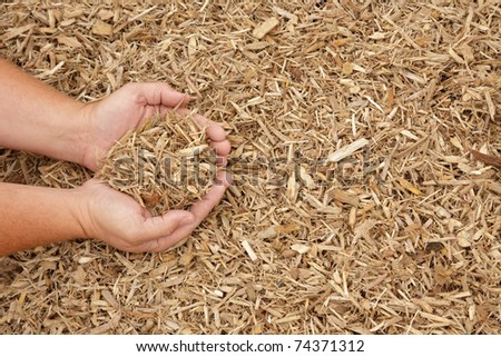 Hands displaying light colored mulch