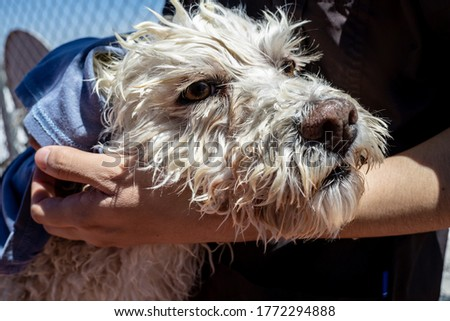 hands drying a dog with a towel