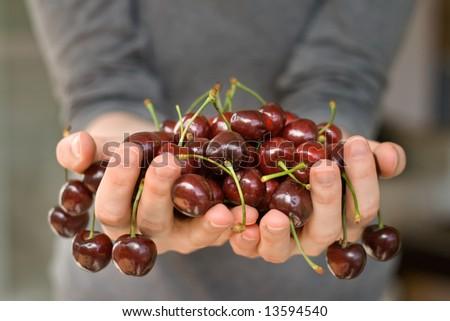 hands full of fresh ripe cherry, shallow DOF