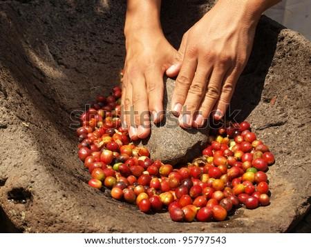 Hands grinding coffee bean berries in stone pestle