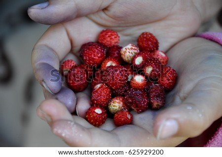 Hands, hand collected forest berries, dirty hands hold a strawberry, strawberries #625929200