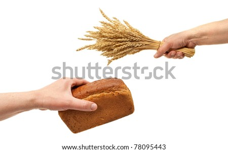 Hands hold bread and wheat ears