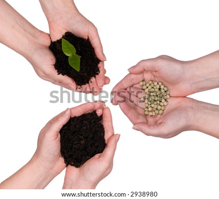 Hands hold the three stages of life, from the seed to the earth to the plant.