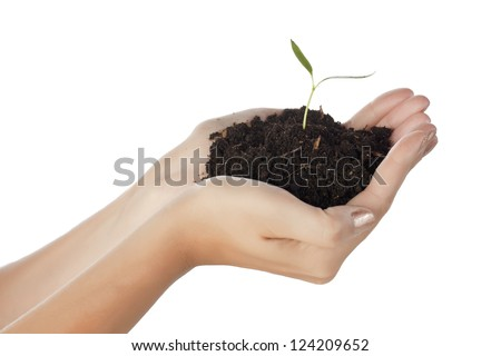 Hands holding a bunch of soil with a newly sprouted plant