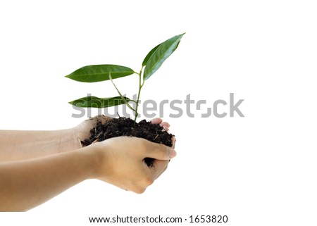Hands holding a new plant