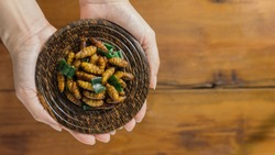 Hands holding a silkworm plate with copy space on wooden background. Insect food is the healthy meal high protein diet. Concepts for edible insects contributing to food security and food revolution