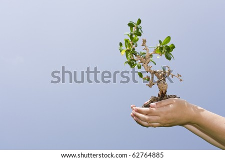 Hands holding a small tree, sky in the background