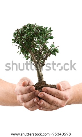 Hands holding a tree isolated on white background.
