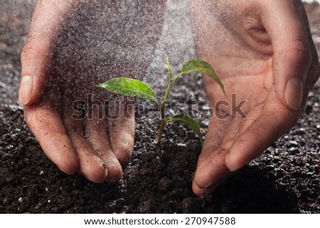 hands holding and protecting a young green plant in the rain