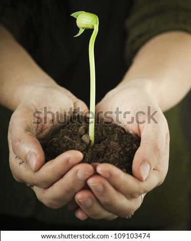 Hands holding bean sprout