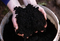 Hands holding fresh home made compost soil