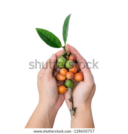 Hands holding fresh raw coffee beans isolated on white background, selective focus.