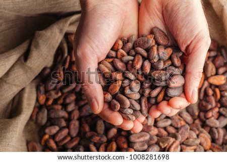 Hands holding freshly harvested raw cocoa beans over a bag with cocoa beans #1008281698