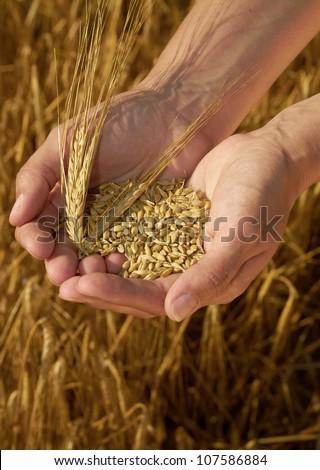 Hands holding grain #107586884