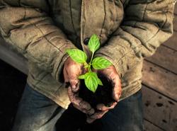 Hands holding green sapling with soil. Gardener man