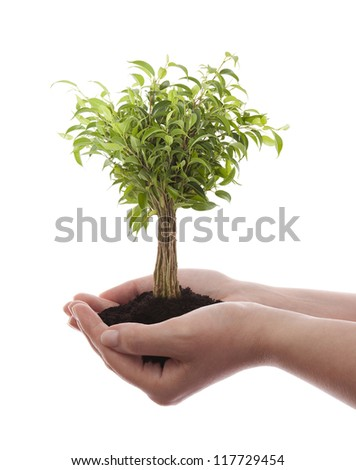 Hands holding green tree isolated on white