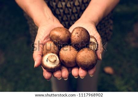 Hands holding mushroom organic produce from farm