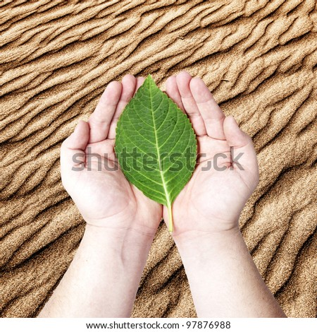 Hands holding on the green leaf on the sand desert background. Concept for planting the tree to reduce global warming